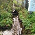 <p>участок дренажной канавы у подстанции</p>